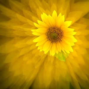 Ethereality - Sunflower