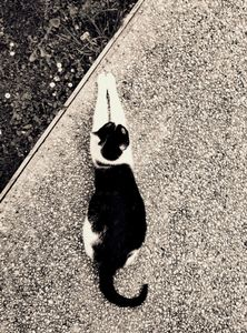 Stray Cat 11
