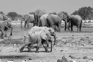 Reunion at the Watering Hole