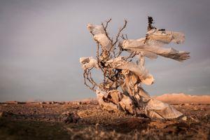 Plastic Tree #49