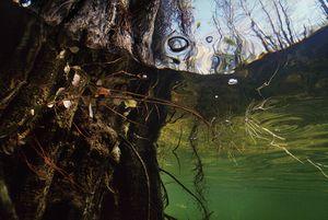 Spanish Moss © Karen Glaser 2009