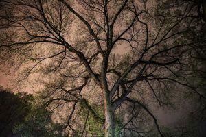 Night Trees of New York: Big Pink Spring