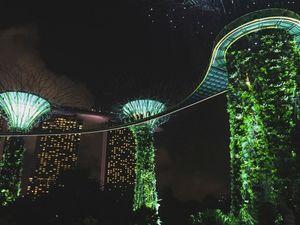 Singapore False Jungle