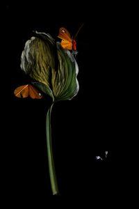 Flowery 3