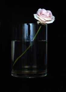 Still Life with One Pink Rose, Studio, NYC