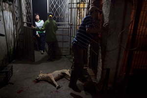 Inside a slaughter house.