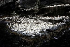 The Shetland Islands: Endangered Nests