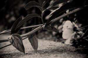 Resting © Rebecca Moseman