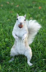 Unordinary squirrel