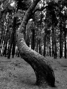 The dancer tree