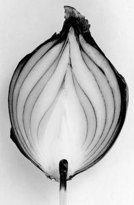 Onion fire