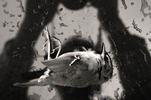 The Lost Bird_X
