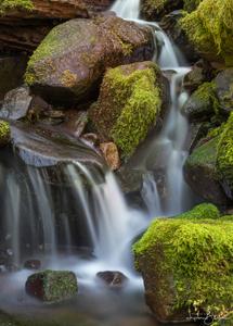 Moss on Tafted Creek