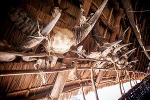 remains of sacrificed buffalos in a Bah Nar communal house in Kon Tum Province
