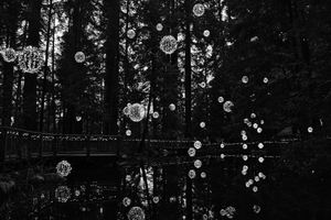 Reflective Lake Lanterns