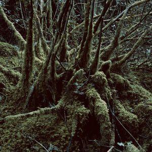 Gehirnbaum