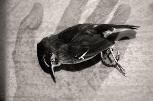 The Lost Bird_VII