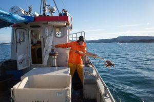 Aabili fishing halibut, Ilulissat