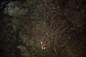 © Vancon Laetitia
