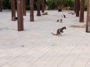 Cats of Aigina