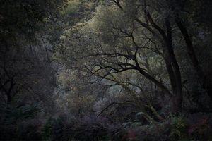 Imago woods I.