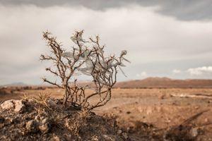 Plastic Tree #38