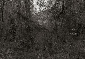 Trees, Vines and Building   © Shaun OBoyle