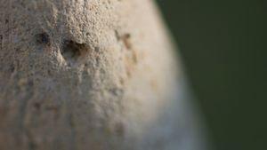 Stones&Faces 05