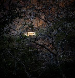 'The Creepy Woods'
