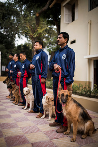 Kolkata Police Dog Squad at their regular evening drill. Mohan Mondal stands with his German Shepherd Gypsy in front.