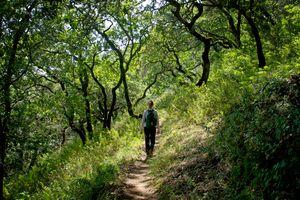 Hiking With Jeanne, Olompali Trail
