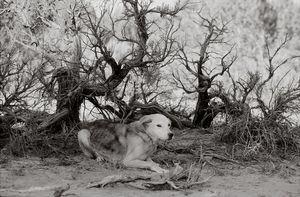 Springfeather, 17 years old, Kanab, Utah