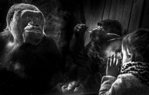 Whispers - Gorilla