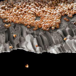 Inner Cliffs of Buckwheat