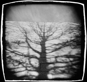 Shadow & Sky, Museum of Fine Arts, Boston