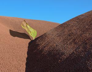 Deserted Leaf