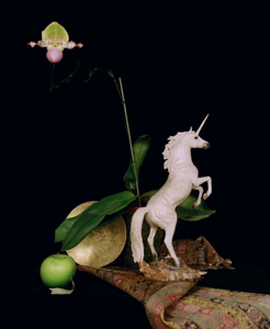 Still life with a Plaster Unicorn,  Studio, Paris