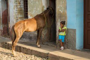 A Horse comes to Visit, Trinidad.