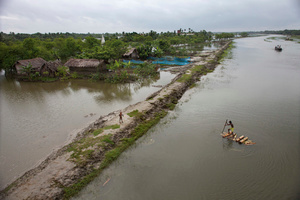 A man steers a banana raft in a flood affected village in Satkhira district.