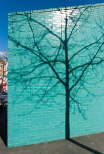 Turquoise & Tree