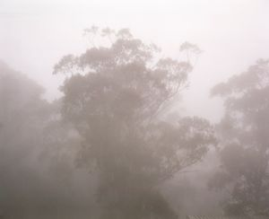 Blue Mountains, 2010 © Rob Philip
