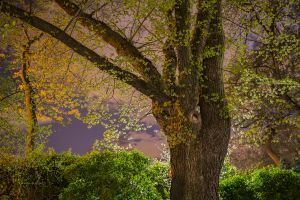 Night Trees of New York: Central Park West Magic