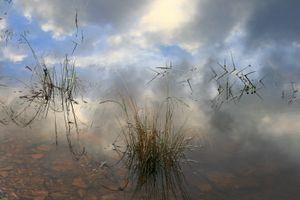 """""""Grasses in the Sky"""""""