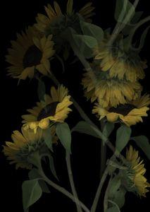 Sunflowers Op. 4