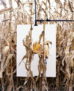 Corn Field. VAN BUREN, INDIANA. 2013