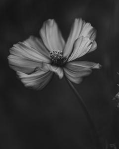 Mono Flower 2