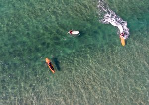 Freshwater Beach, NSW Australia