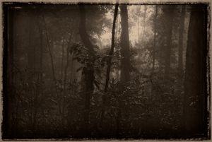 Sightings In Gondwana #9