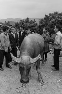 Bull Trade