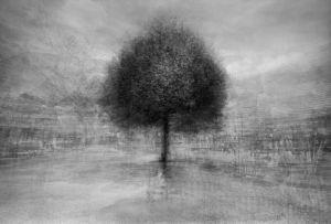 stadtbaum#19